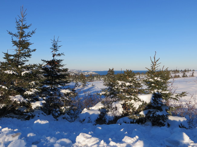 Beautiful Winter Scenery Carbonear, Newfoundland and Labrador Canada
