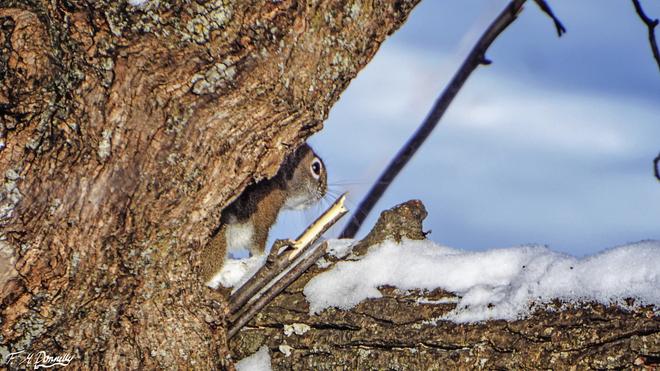 Spot the Squirrel Smiths Falls, Ontario Canada