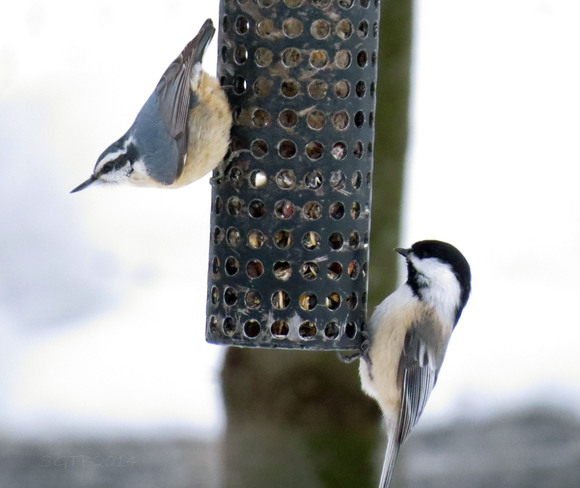 Sharing The Suet Barrie, Ontario Canada