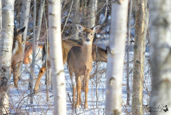 You looking at me? Barachois, New Brunswick Canada