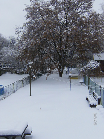 snow covered backyard Newmarket, Ontario Canada