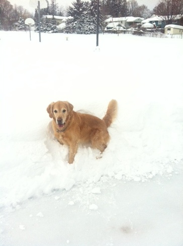 Someone is enjoying all of the snow ! Orillia, Ontario Canada