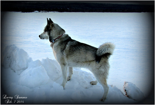 """Leka Watching The Sunrise"" Springdale, Newfoundland and Labrador Canada"