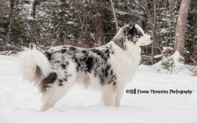 Show pose! In the snow =) Yarmouth, Nova Scotia Canada