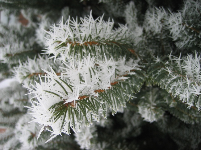 Ice crystals Kitchener, Ontario Canada