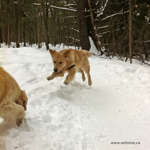 Pounce on that stick! Fun on today's dogwalk Stittsville, Ontario Canada