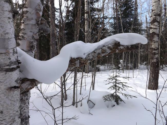 SNOW SNAKE Thunder Bay, Ontario Canada