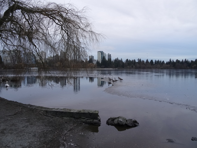 Frozen Lake!! Vancouver, British Columbia Canada