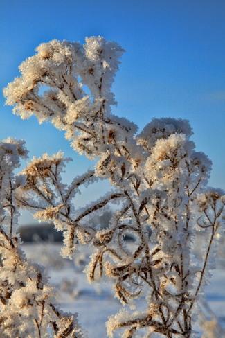 Frosty morning London, Ontario Canada