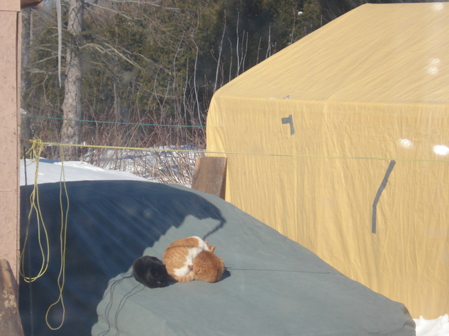 Strays Trying To Keep Warm Long Sault, Ontario Canada