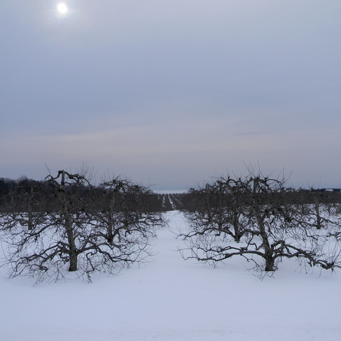 Northumberland orchard Colborne, Ontario Canada