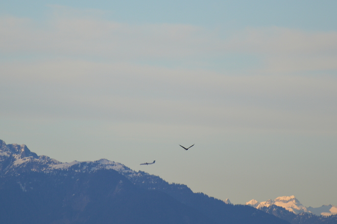 Fly By Delta, British Columbia Canada