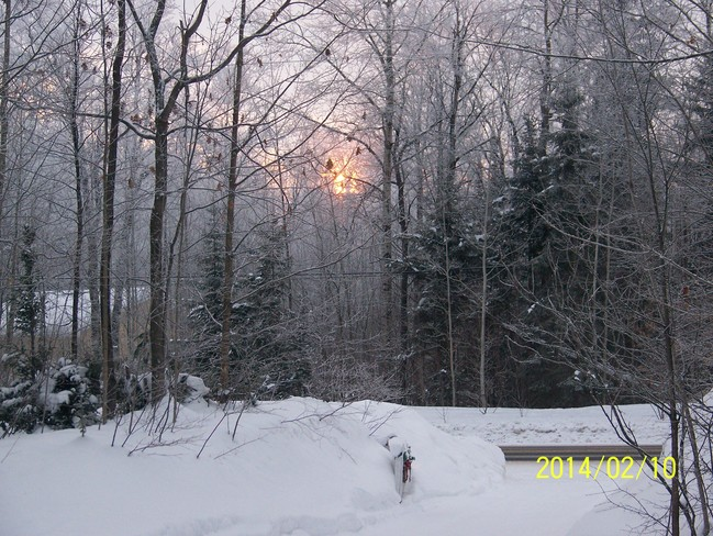 Sunrise & frost on the trees Kirkfield, Ontario Canada