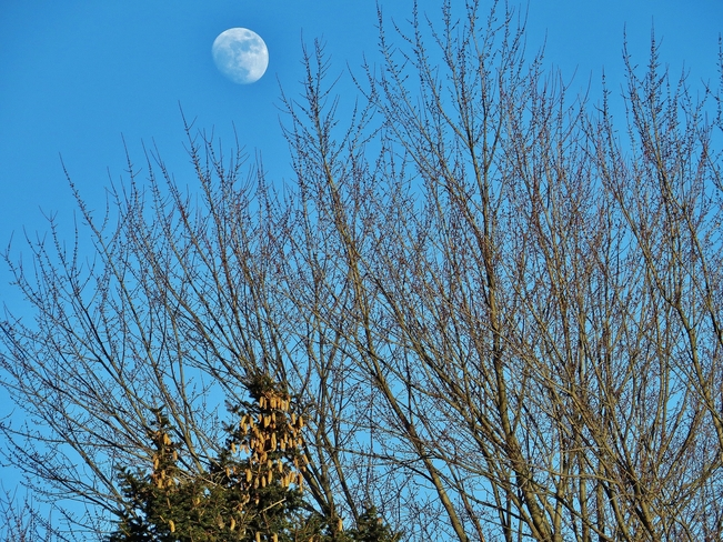 Beautiful blue sky with 85% full Snow Moon. North Bay, Ontario Canada