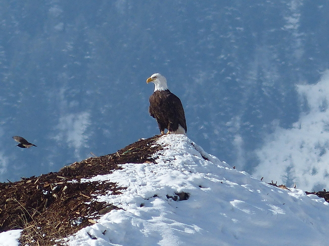 King of the hill Grand Forks, British Columbia Canada
