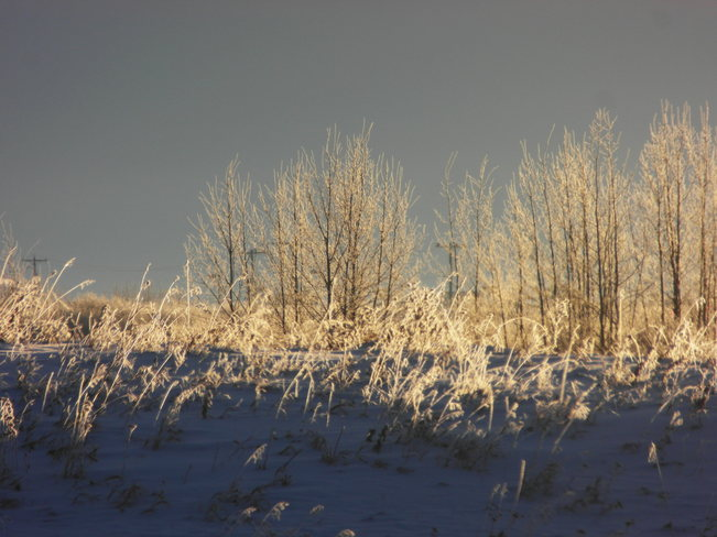 Royal oak wetlands.Beautiful frozen also.A moose in the trees.Its a shame he wil Calgary, Alberta Canada
