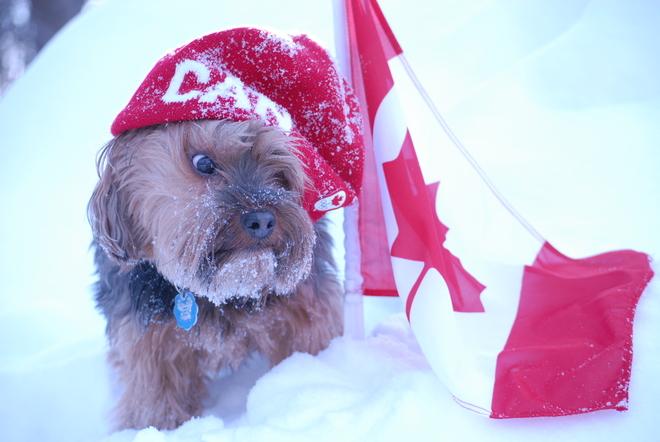 GO Canada! Orillia, Ontario Canada