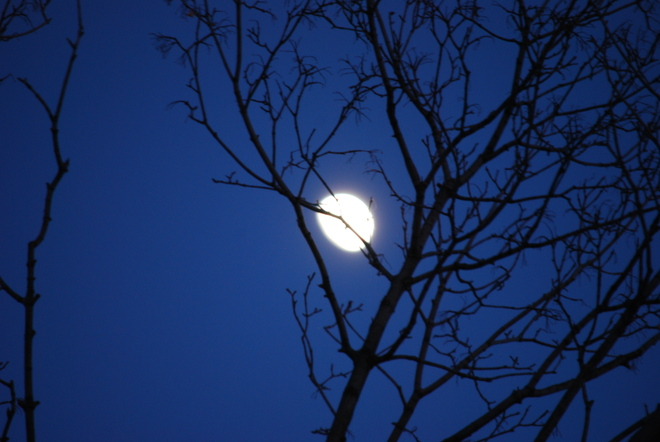 Night Moon Bramalea, Ontario Canada
