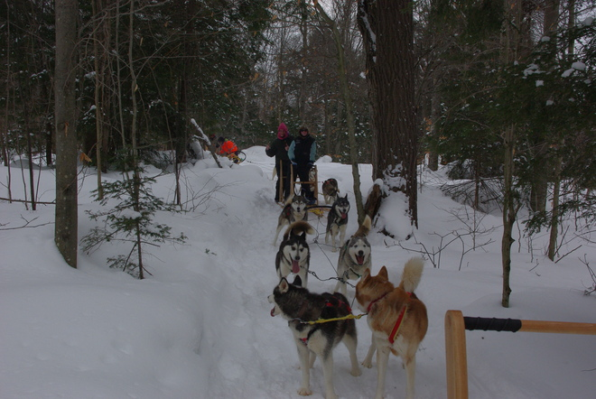 Dog Sledding Haliburton, Ontario Canada