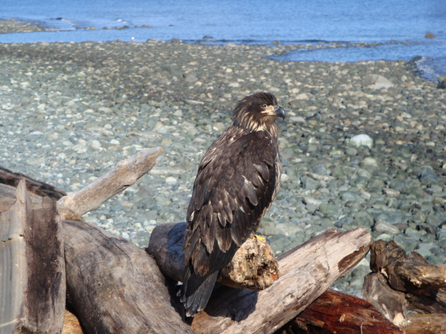 Just Chillin' Campbell River, British Columbia Canada