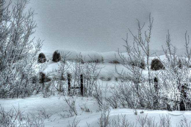 FENCED IN Saltcoats, Saskatchewan Canada