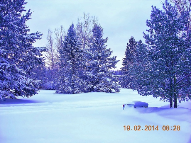 What they call a little dusting on the trees... Salisbury, New Brunswick Canada