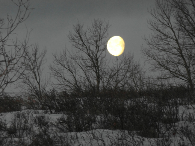Moon over nose hill.Morning sunrise. Calgary, Alberta Canada