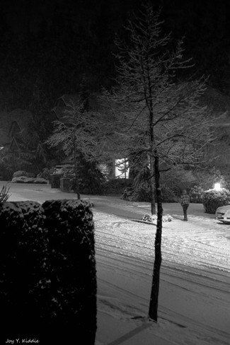 Late February in a suburb of Vancouver, BC Coquitlam, British Columbia Canada