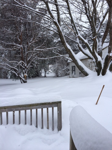 Come on, really?? More Snow!?!? Sherwood, Prince Edward Island Canada