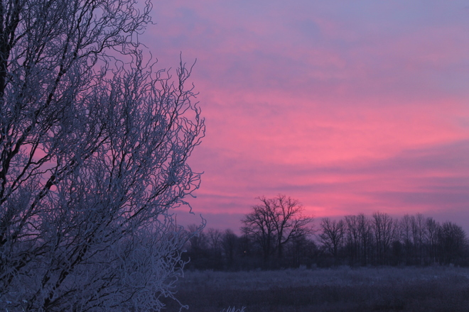Frosty Tree at Sunrise New Credit, Ontario Canada