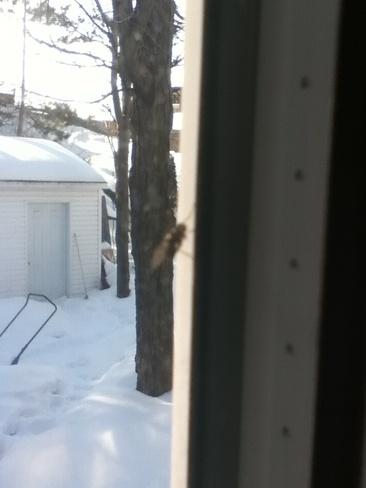 Premiere mouche de l'anéee Trois-Rivières, Quebec Canada
