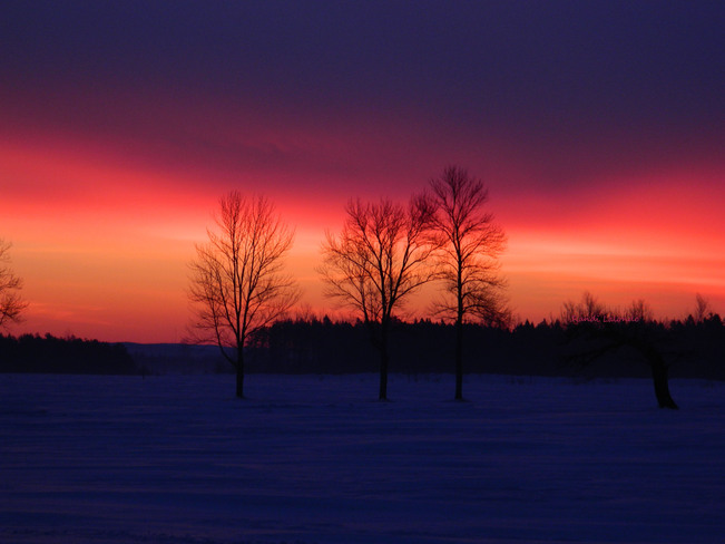 Blooming colours at Dawn Elmvale, Ontario Canada