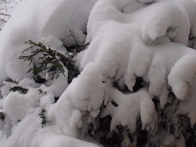 snowy Thunder Bay, Ontario Canada