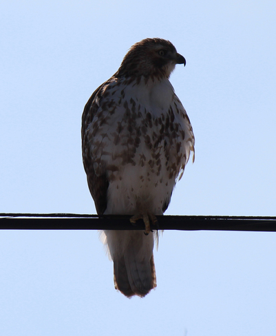 Bird on a Wire. Welland, Ontario Canada