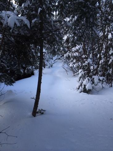 the snow and trees are so prett Thunder Bay, Ontario Canada