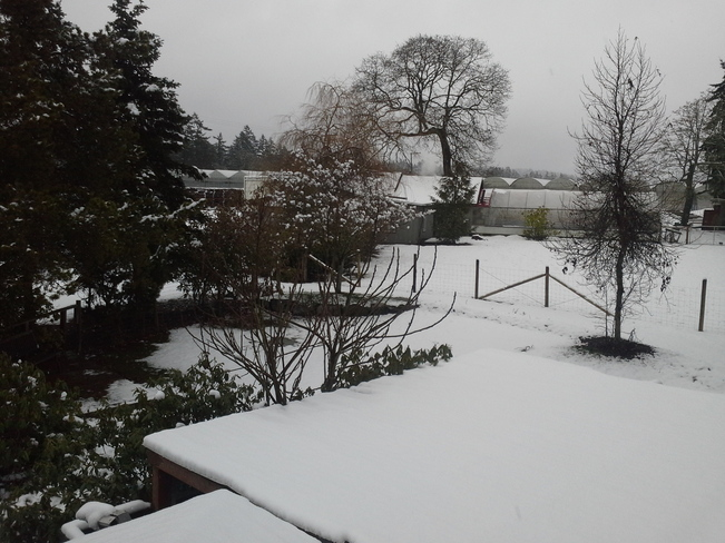 A sudden burst of Winter for the South Coast North Saanich, British Columbia Canada