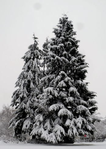 Christmas Tree in February Burnaby, British Columbia Canada