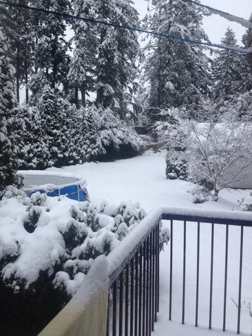 It's snowing! Brentwood Bay, British Columbia Canada