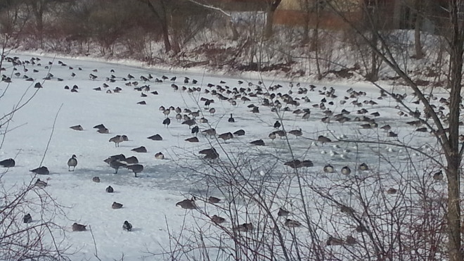 Abundance of birds. Welland, Ontario Canada
