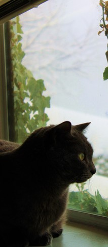 Cat watching the snow West Vancouver, British Columbia Canada