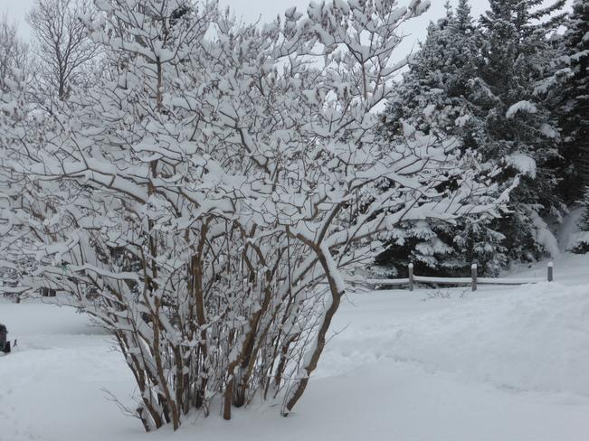 Snow Covered Birchy Bay, Newfoundland and Labrador Canada