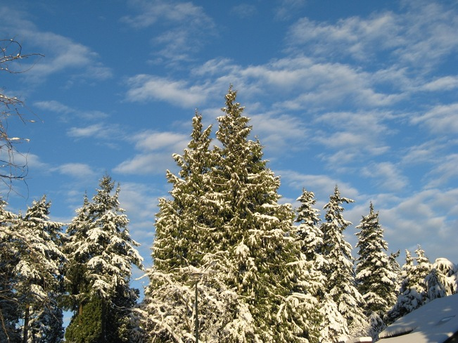 Snow Covered Trees At Sunrise White Rock, British Columbia Canada