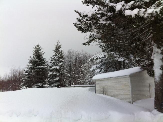 Hidden In Snow? Gander, Newfoundland and Labrador Canada