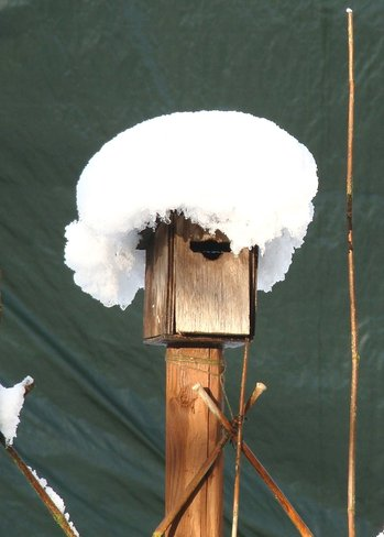 Bird house with wig.