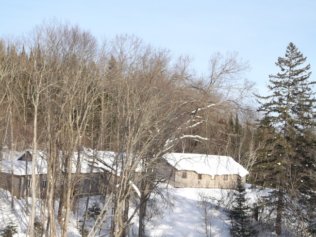 TREE ON OLD BUILDING Massey, Ontario Canada