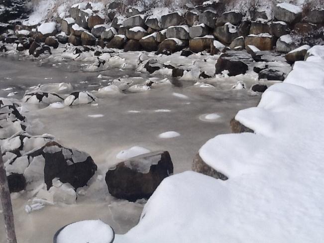 Snow Petals West Pennant, Nova Scotia Canada