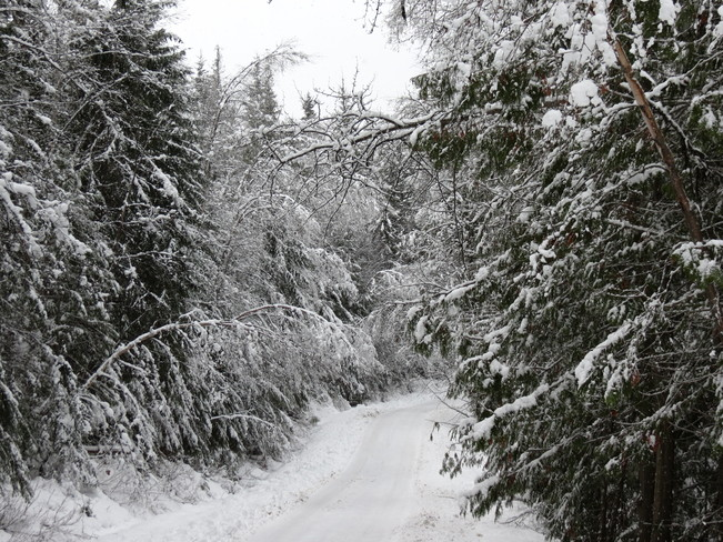 The beauty of Snow Forest Grove, British Columbia Canada