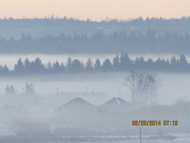 Morning mist Cloverdale, British Columbia Canada