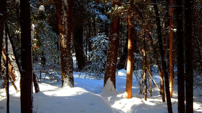 Forêt enchantée La Baie, Quebec Canada