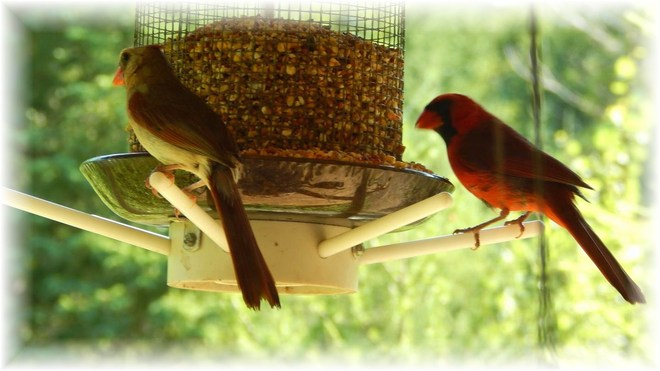 Cardinal and his wife Mount Forest, Ontario Canada